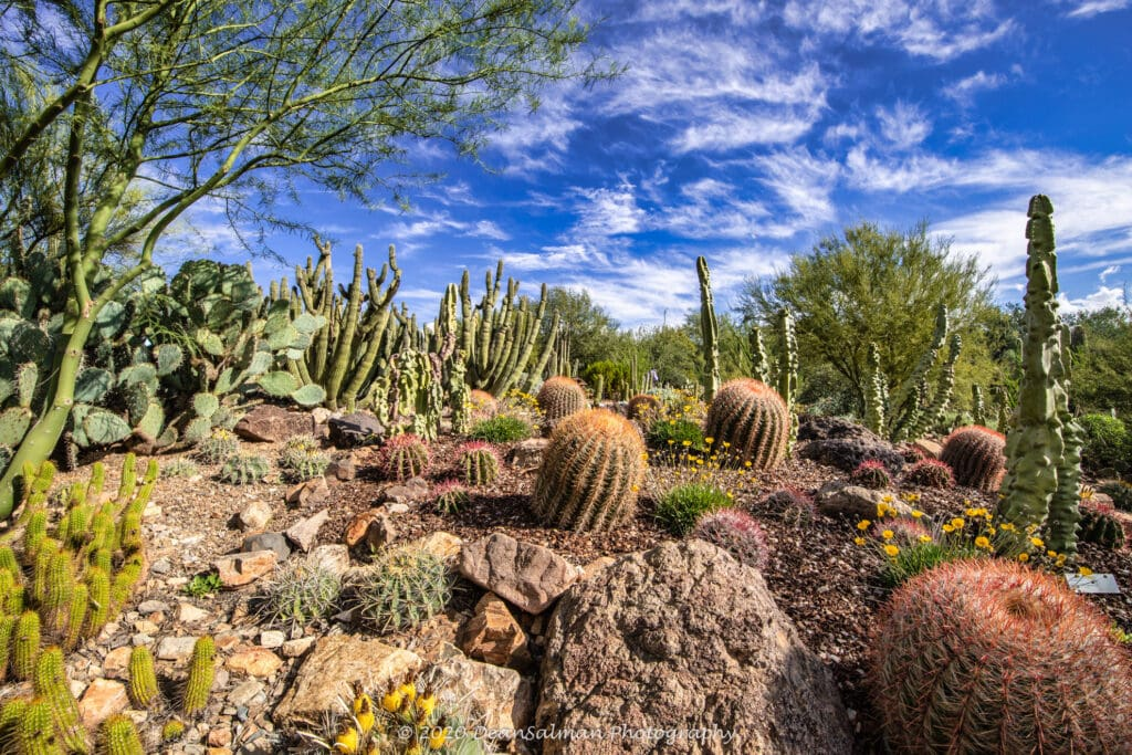 Dean Salman Desert Photography