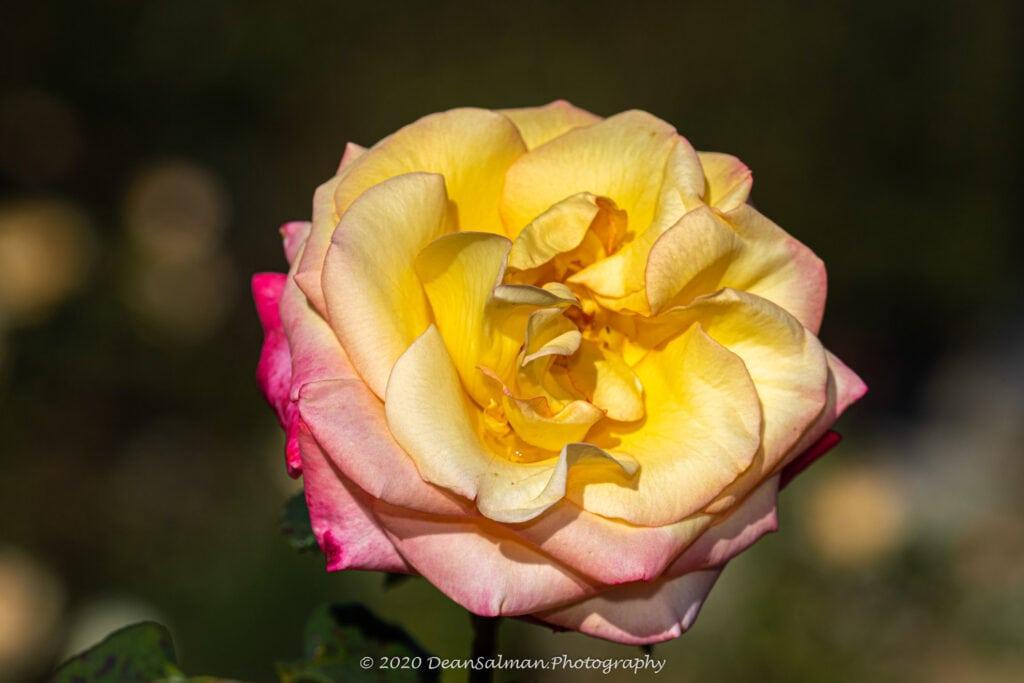Dean Salman Flower Photography