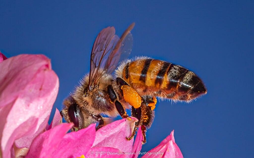 Bee Photography