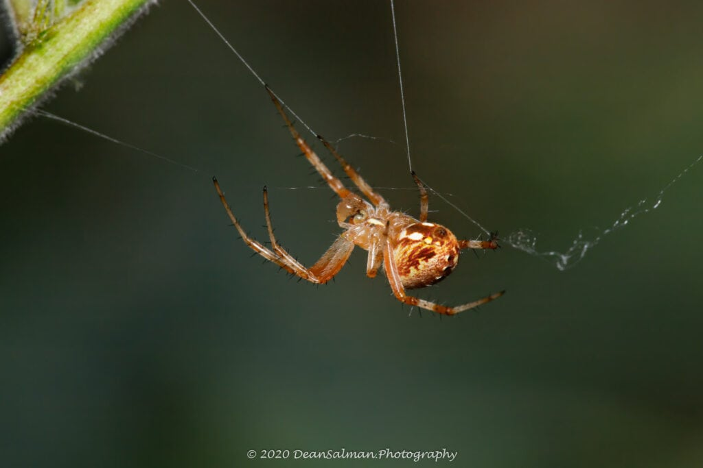 Dean Salman Spider Photography