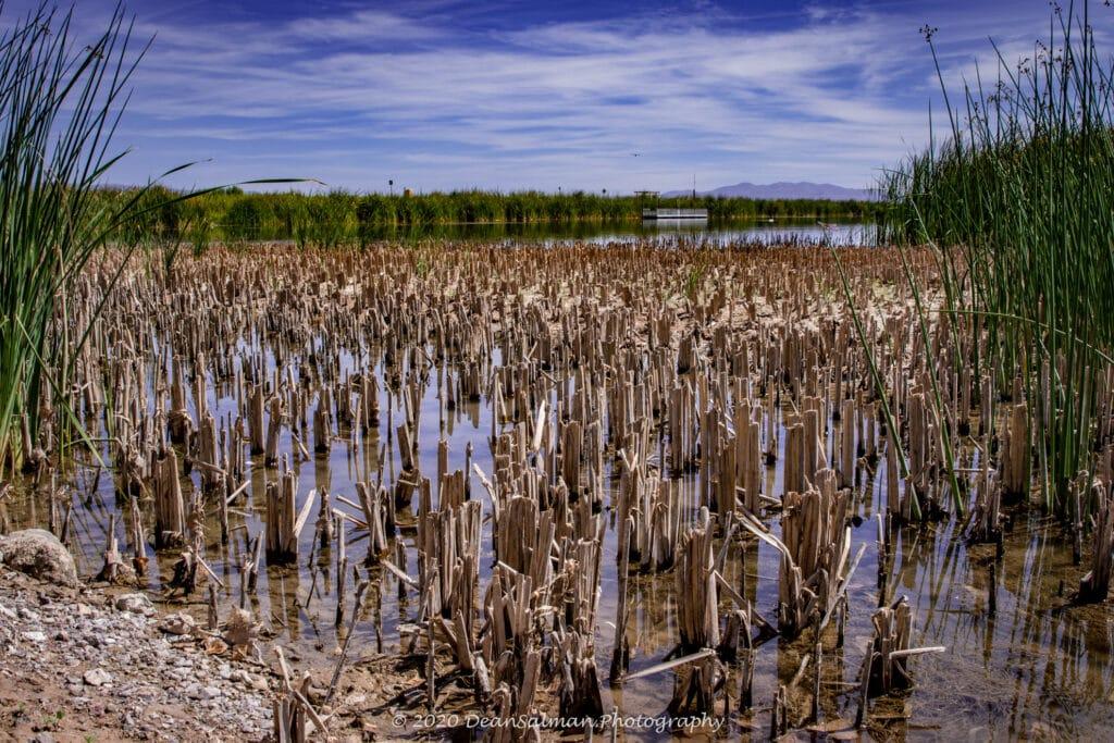 Dean Salman Lake Photography